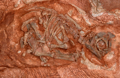 Orain arte aurkitutako dinosauro zaharrenen aztarnak agertu dira Hegoafrikan