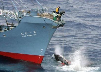 Japoniarren Antartikoko bale ehiza debekatu du Nazioarteko Justizia Epaitegiak