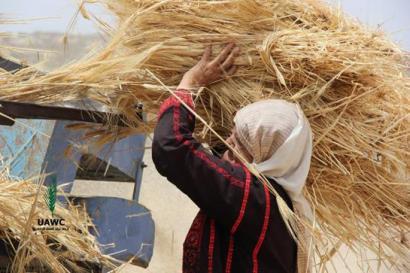 Gazako nekazarientzat laguntza biltzen ari da 'Elikaherria'