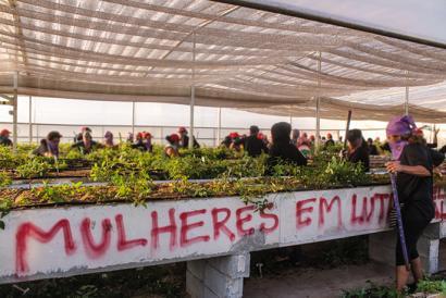 Lurrik Gabeko Nekazariek eukalipto transgenikoak suntsitu dituzte Brasilen