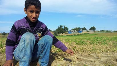 Gazako uzta ugari hondatu ditu abioi israeldar batetik botatako herbizidak