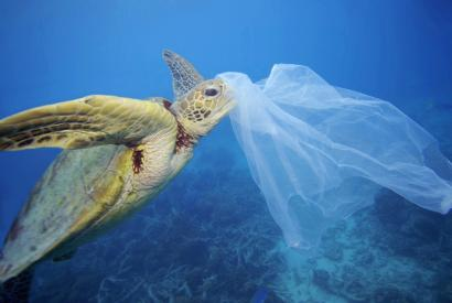 Arrain eta itsaskien bitartez iristen zaigun plastikoaren arriskua nabarmendu du Greenpeacek