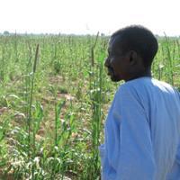 Lurren lapurretak matxinada berriak dakartza Afrikara