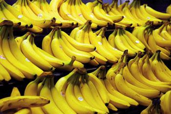 Banana, hazirik gabeko fruitua.