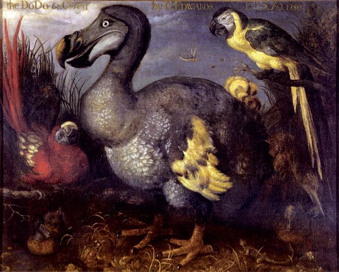 Edwardsen dodoa, Roelant Saveryk 1620ko hamarkadaren amaieran margotutakoa. 1759an koadroa George Edwards ornitologoaren eskuetan zegoen, eta British Museumari ematea erabaki zuen; hortik datorkio izena artelanari.