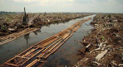 Indonesiak aurrea hartu dio Brasili deforestazioan