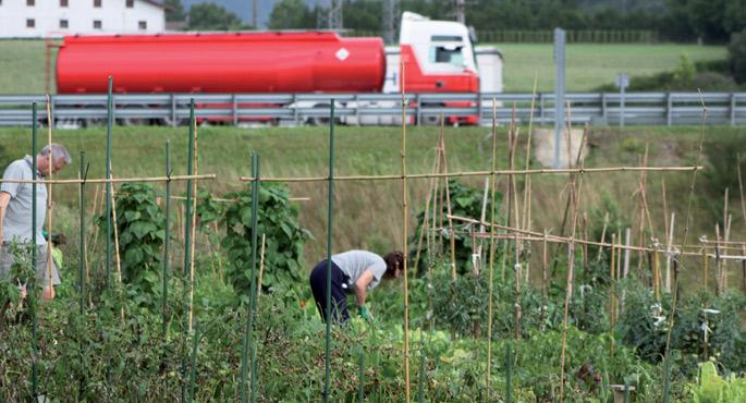 Kutxa Ekogunean dago Donostiako baratze parkea. Lehen planoan tomateak erdoilak hartu dituela ikus daiteke.
