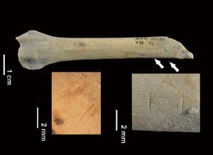 Txakur egosia Atapuercako gizakien dietan