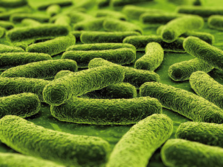 Suak piztu al zuen tuberkulosia?