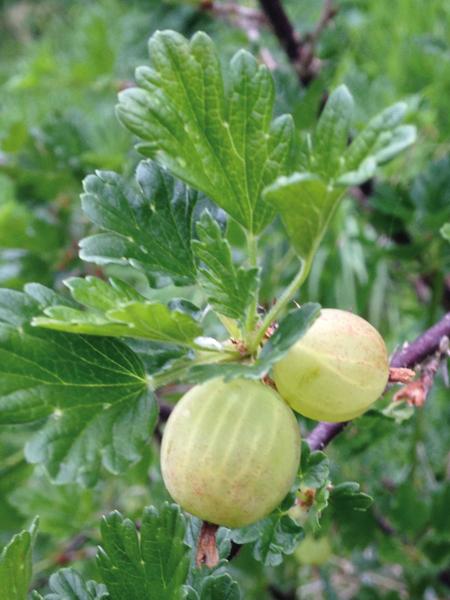 """""""Baso jangarri"""" esaten zaio azken urteotan hedatuz doan nekazaritza ikuspegi berri bati. Argazkian, arakatza. (Arg.: Jakoba Errekondo)"""