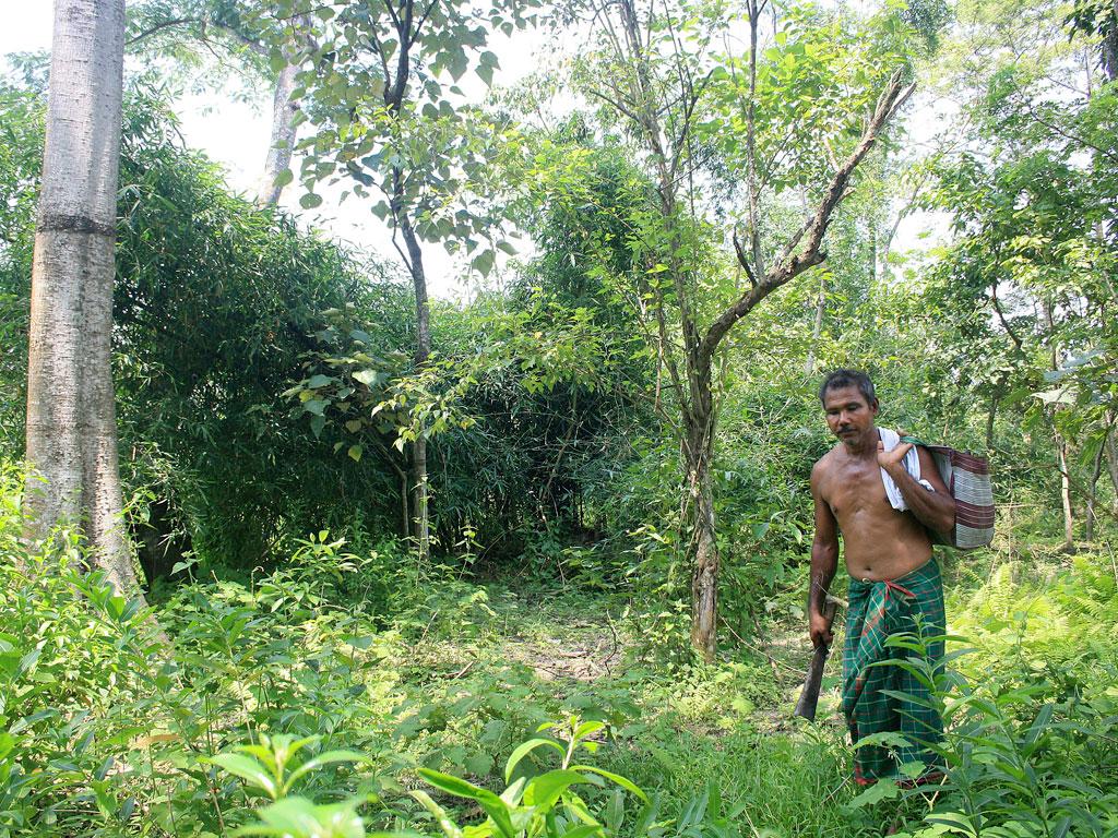 Forest Man' dokumentaletik ateratako fotograman, Jadav 'Molai' Payeng bere eskuz bizi osoan zehar landatu eta zaindutako basoa erakusten atzerritarrei. Assam estatuko etnietako bat osatzen duten Mising jendea Brahmaputra ibai bazterretan bizi da, ibaiak e