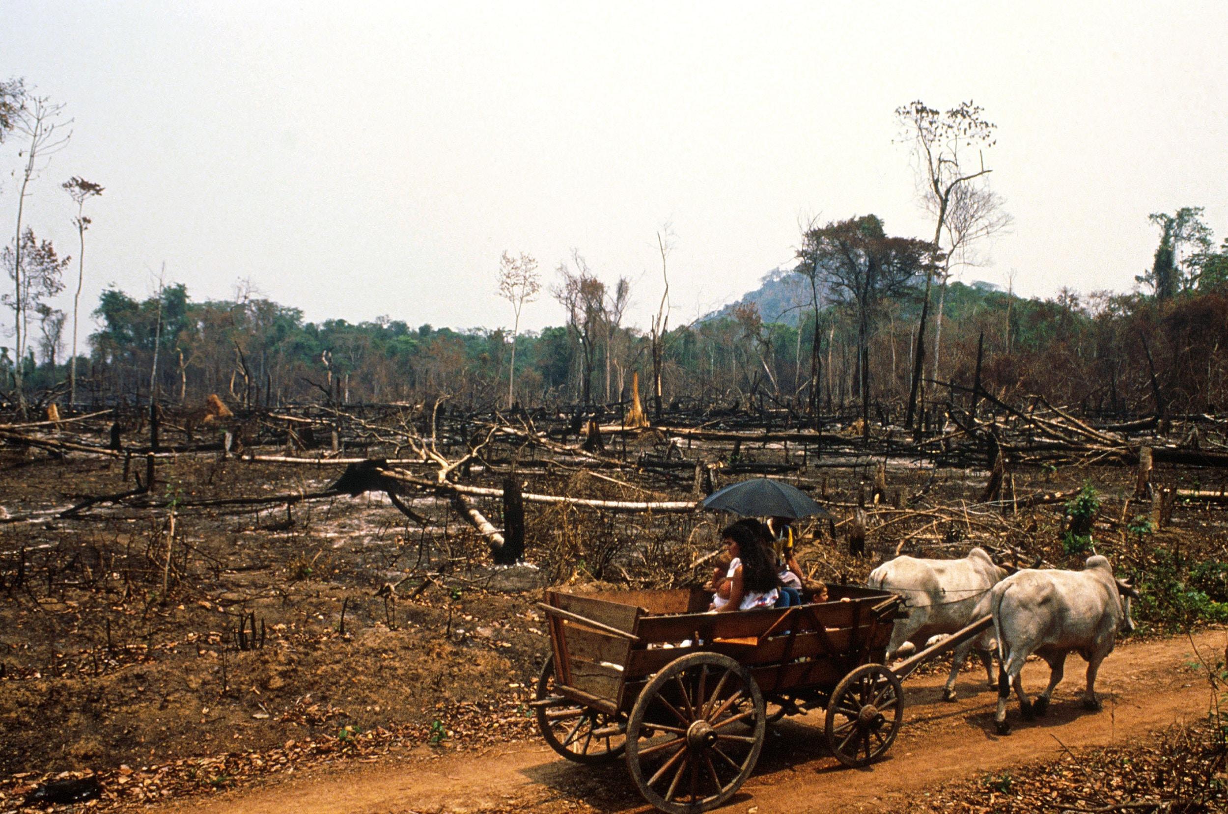 Amazonia 1989 : 1930eko hamarkadatik aurrerapen eta nazionalismo aipamenez justifikatzen du eskuin brasildarrak Amazoniako oihanaren suntsiketa. (Argazkia: Antonio Ribeiro)